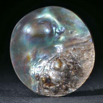 Haliotis-Freiform mit angewachsener Perle
