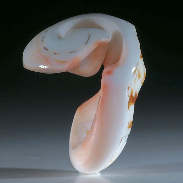 Flügelschnecke (lambis chiragra) Fingerring
