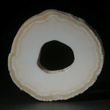 Narwalzahn (Einhorn) Querschnitt