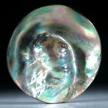 Abalone Neuseeland, grosses Oval mit eingewachsener Perle