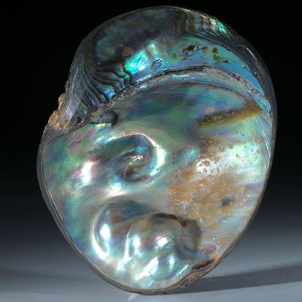 Abalone Perlmutter Freiform mit Blisterperle ca.60x48x18mm