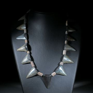Megalodon Collier (versteinerter Haifischzahn)