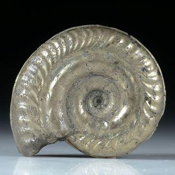 pyritisierter Ammonit ca.32x25x11mm, Atelier Hochstrasser, 18.3g   50.-