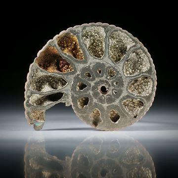 pyritisierter Ammonit, Wolga Russland, einseitig plangeschliffen und poliert, ca.46x38x7.5mm