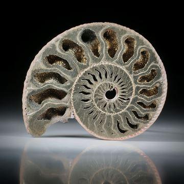 pyritisierter Ammonit, Wolga Russland, einseitig plangeschliffen und poliert, ca.48x38x8.5mm