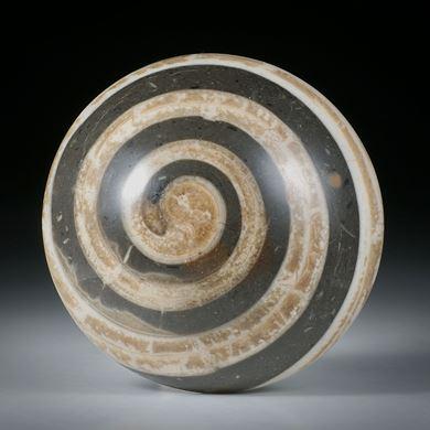 Bild für Kategorie Fossilien