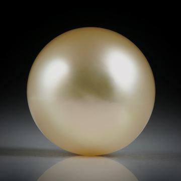 Südseeperle gelb, rund, ungebohrt, Durchmesser 13.3mm