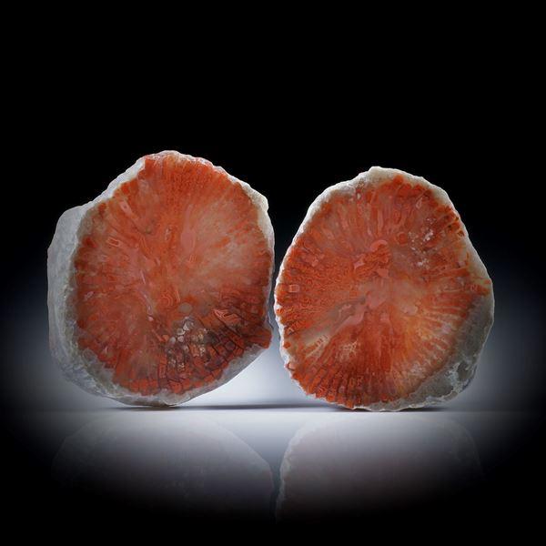 Fossile rote Hornkoralle (Utah) 70.39ct. Querschnitt Paar poliert, Aussenseite naturbelassen, je ca.28x25x5mm