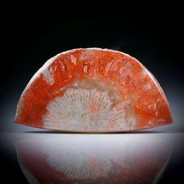 Fossile rote Hornkoralle (Utah) 33.02ct. Querschnitt mit Farbverlauf, teilweise naturbelassen, ca.41x22x5mm