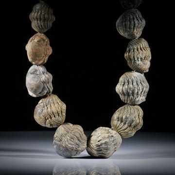 Collier aus versteinerten Trilobiten (Roller), im Verlauf. Durchmesser von ca.7mm bis 30mm, Länge 51cm
